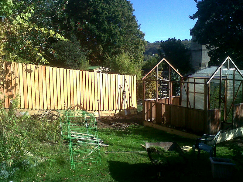 Gorgeous new fence of untreated large feather-edge boards, and old cedar greenhouse undergoing repair