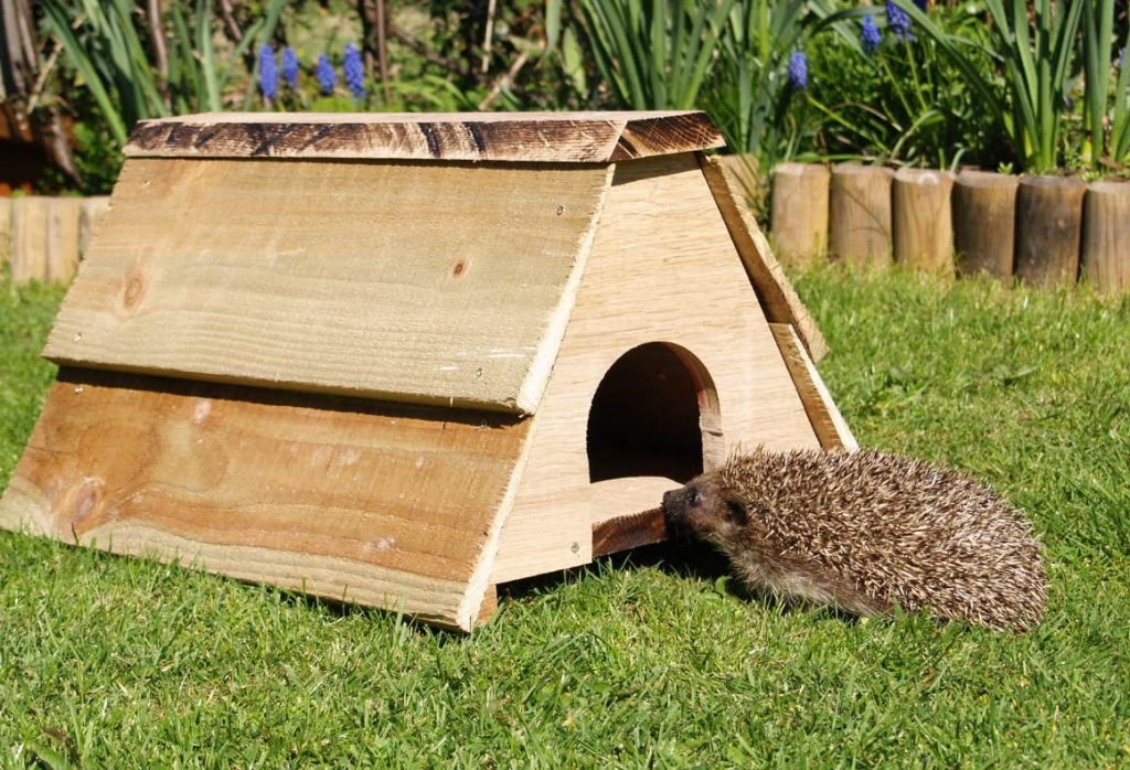 October is a good time of year to buy or make a hedgehog nest box
