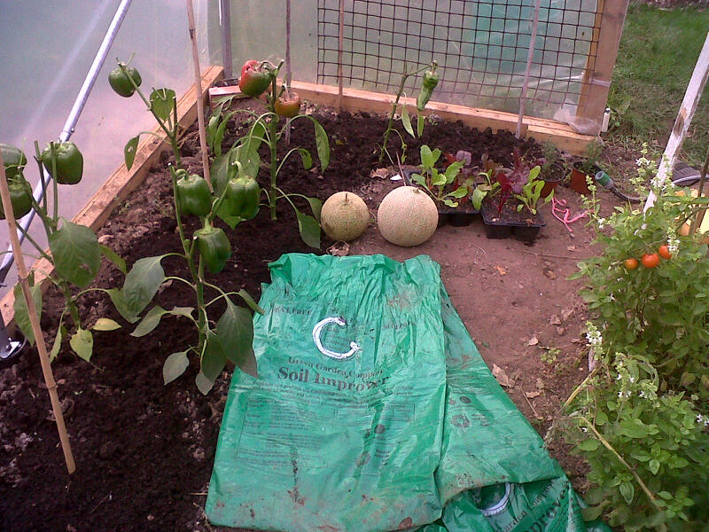 mulching polytunnel bed with compost from Bisley Community Composting
