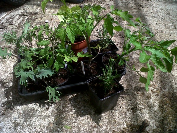 Plants for Stroudco Food Hub