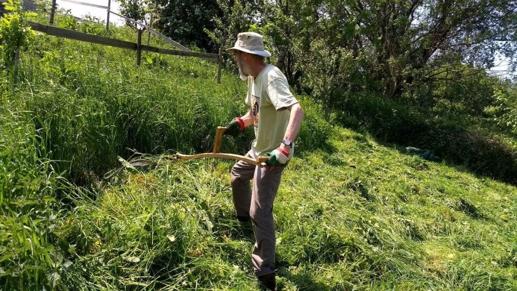 Scything an orchard with an Austrian Scythe